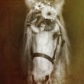 Unicorn by Elaine Malott