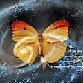Universal Butterfly by Ramona Murdock