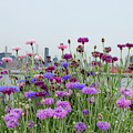 Urban Wild Flowers 2 by Cate Franklyn
