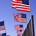 U.s. Flags, Presidents Day, Central Valley, California by Brian Tada