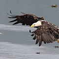 Valdez Eagle One by Jean Clark