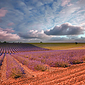 Valensole France by Eric Rousset