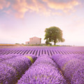 Valensole Plateau 2 by Giovanni Allievi