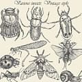 Vector Set Insects In Vintage Style by Horg