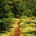 Velvet Rocks On The Nh Appalachian Trail by Raymond Salani III