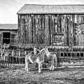 Vermont Barn And Horses Sugarbush Farm by Edward Fielding