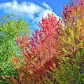 Vibrant Autumn Hues At Cornell University - Ithaca, New York by Lynn Bauer