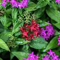Vibrant Petals by Az Jackson