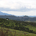 View Of Simi Valley From Reagan Library Grounds 3 by Colleen Cornelius