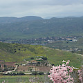 View Of Simi Valley From Reagan Library Grounds 8 by Colleen Cornelius
