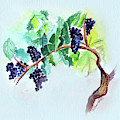 Vine And Branch by Allison Ashton