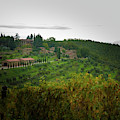 Vineyards Of Chianti by Mark Duehmig