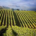 Vineyards Of Chianti by Scott Kemper