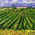Vineyards Of Tuscany by Asha Sudhaker Shenoy