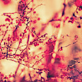 Vintage Autumn I by Anne Leven