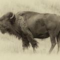 Vintage Bison I by Harriet Feagin