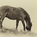 Vintage Horse  by Harriet Feagin