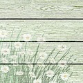 Vintage Shabby Chic Daises On Wood by Shabby Chic Art