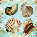 Vintage Shells Collage by Peggy Collins