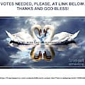 Votes Needed Swans by Rose Santuci-Sofranko