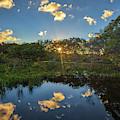 Wakodahatchee Wetlands Sunburst by Juergen Roth