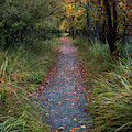 Walk In The Rain by Darylann Leonard
