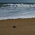 Walking Hampton Beach by Jeff Folger