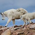 Walking The Ridge. by Jason Bohl