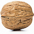 Walnut White Background by ENZO Art in photography