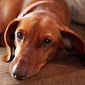 Walter The Dog by Gordon Elwell