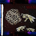 Wasps by Hartmut Jager