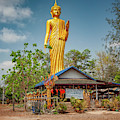 Wat Kham Chanot Golden Buddha by Adrian Evans