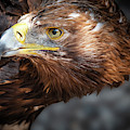 Watching Eagle by Eyeshine Photography