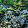 Water In A Dark Forest by Sun Travels