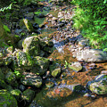 Water In A Forest In Vogelsberg by Sun Travels