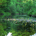 Water Lilies In The Spreewald by Sun Travels