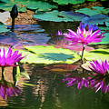 Water Lily 6 by Claude LeTien