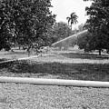 Water Spray Orchard by Venancio Diaz