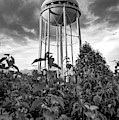 Water Tower Of Bentonville Arkansas - Monochrome Edition by Gregory Ballos