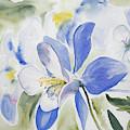 Watercolor - Colorado Blue Columbine by Cascade Colors