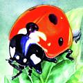 Watercolor Ladybug by Irina Sztukowski