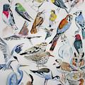 Watercolor - North American Birds by Cascade Colors