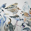 Watercolor - North American Birds Detail by Cascade Colors
