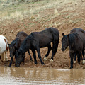 Watering Hole by Ronnie and Frances Howard