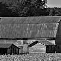 Weathered Barn by Robert Lowe