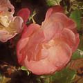 Weeping Rose  by Lynda Lehmann
