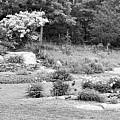 Weir Farm Field Garden B W by Rob Hans