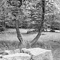 Weir Farm Stones And Trees B W by Rob Hans