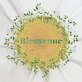 Welcome - Bienvenue by Terry Davis