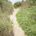 Wellfleet Sand Dunes by Edward Fielding